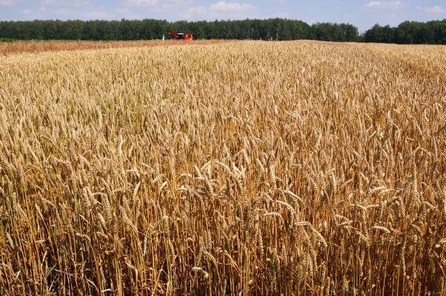 Российский и турецкий послы при ВТО обсудят пошлины на пшеницу