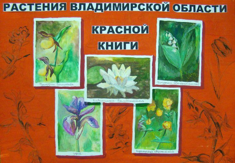 «Растения Владимирского края»