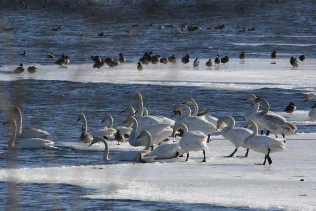 Птицы на Халактырском озере.
