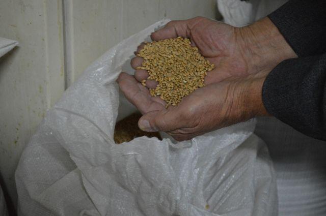 В Тюменской области женщина стащила 80 кг зерна и обменяла его на спиртное