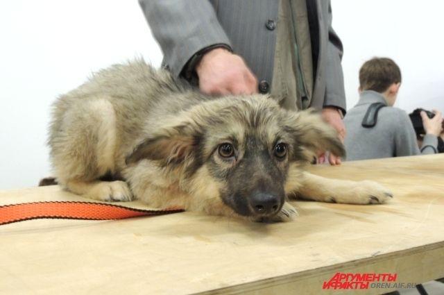 Список собак икошек создадут вПетербурге