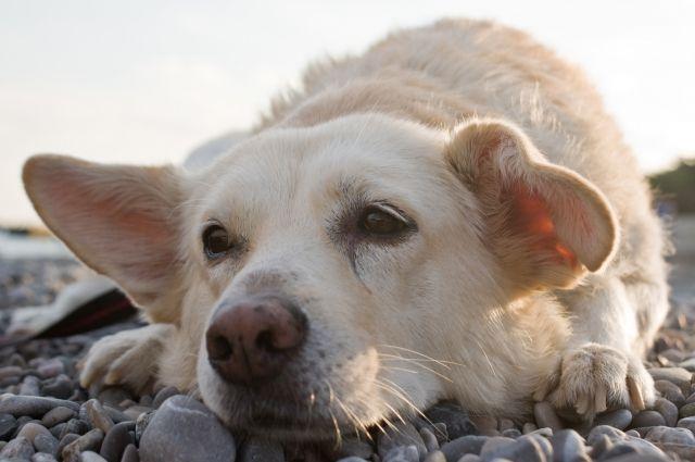 Неподалеку от одной омской клиники лежат трупики собак