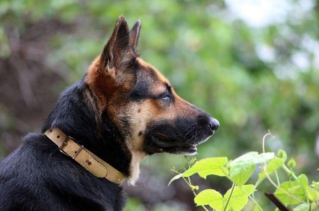 Под Соль-Илецком женщина украла собаку инакормила ейсемью
