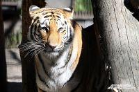 В Новосибирском зоопарке живет около 770 видов животных