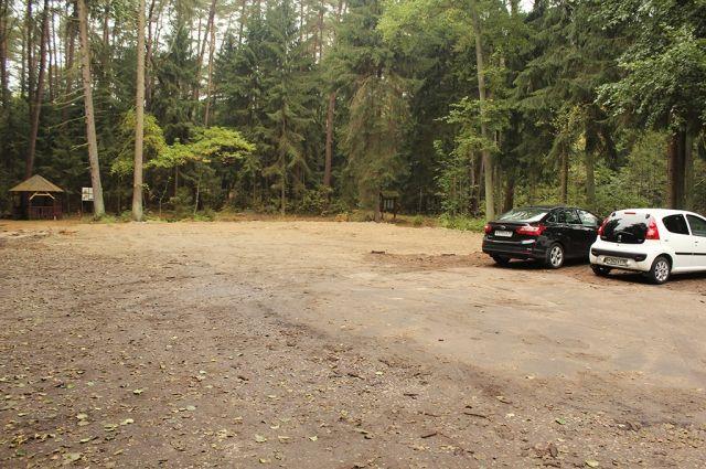 В национальном парке «Куршская коса» неизвестные спилили 15 деревьев.