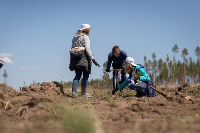 По восстановлению леса, как и по его заготовке, Иркутская область считается лидером в России.
