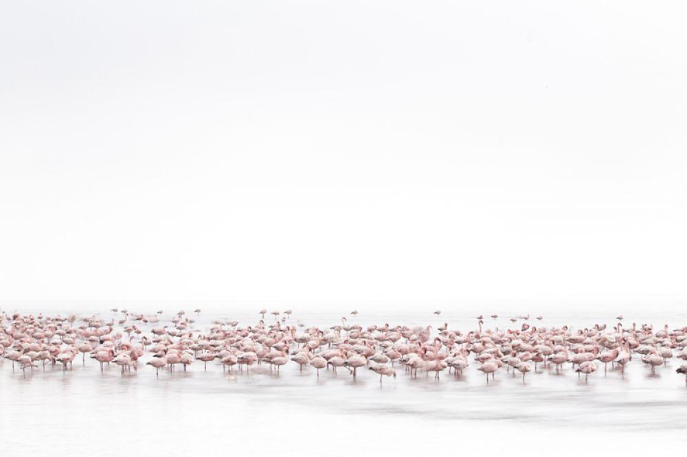 1 место в категории «Дикая природа». Фламинго на мелководье Уолфиш-Бей в Намибии.