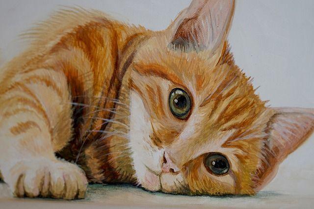 В Тюмени может появиться кафе с двадцатью кошками