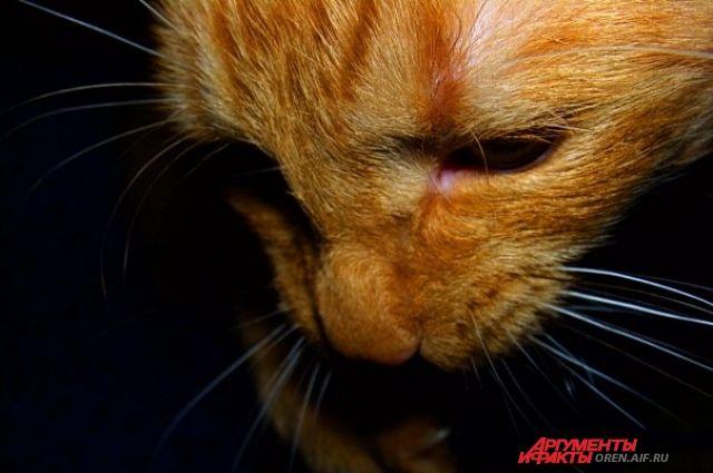 Не каждая кошка встречает на своем пути доброго человека.