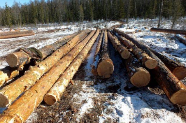 Житель Иркутской области, не имея разрешительных документов, вырубил 78 сосен и лиственниц.
