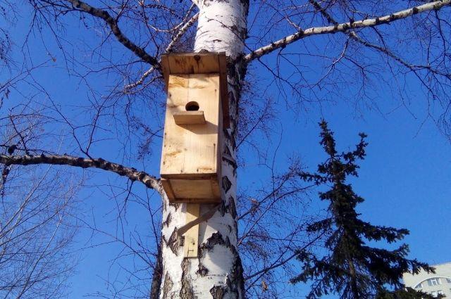 Скворечники можно будет забрать с собой и разместить в парке, в лесу или во дворе.
