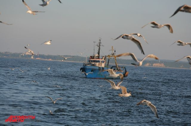В Куршском заливе обнаружили тело одного из двух пропавших рыбаков.