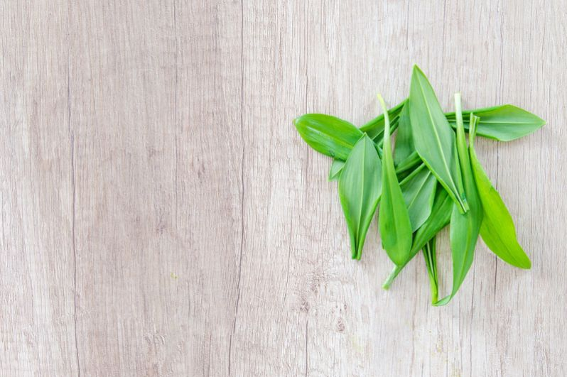 Черемша. Весной островато-пряная черемша становится непременным компонентом зеленых салатов. Это отлично, потому что черемша — очень полезное растение. В ней содержится витамин С, витамин А (отвечает за правильный обмен веществ, а также молодость и красоту), витамины группы В, в том числе фолиевая кислота, витамин РР, при недостатке которого нас атакуют сезонная депрессия, бессонница и многие другие неприятности. А также микроэлементы: железо, медь, марганец, селен, фтор, цинк, йод, фруктоза, бета-каротин, эфирные масла, аминокислоты.