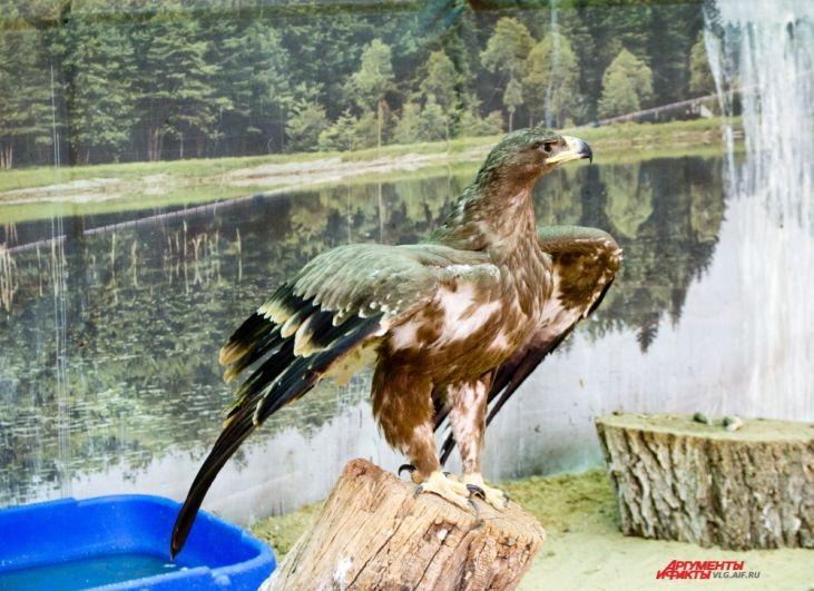 Хищник расправляет крылья, демонстрируя свое величие.
