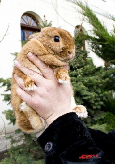 Кролик Аяврик получил прозвище в честь волчонка из советского фильма. Аяврик в переводе означает любимый.