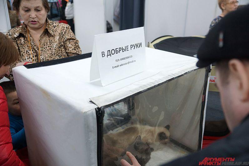 Отдельные стенды посвящены бездомным животным.