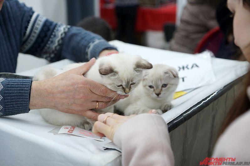 Международная выставка кошек стартовала на территории Пермской ярмарки в субботу, 1 апреля.