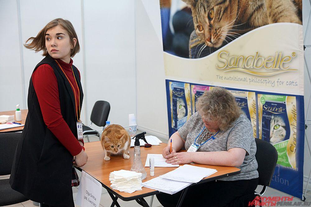 Кошки продемонстрируют красоту, ум и грацию судьям международного уровня.