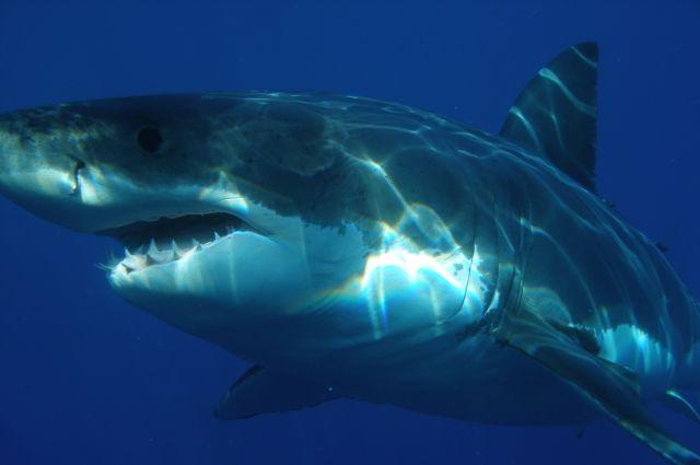 Акула схватила тюленя наглазах утуристов