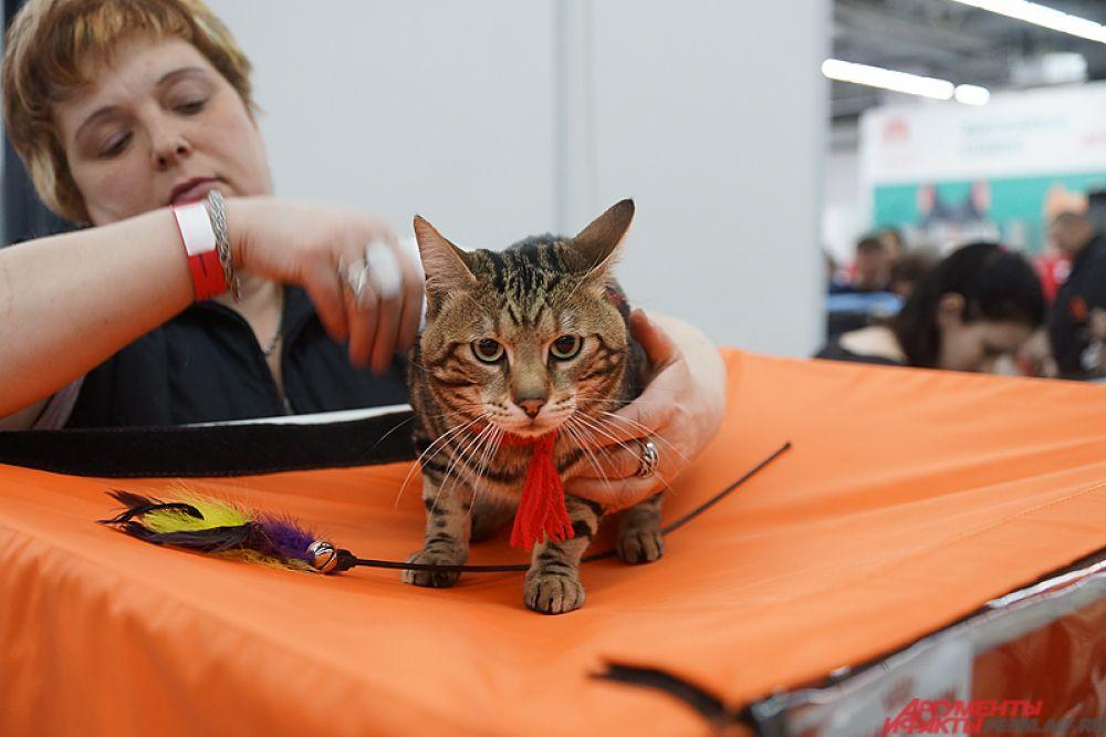 Международная выставка кошек продлится два дня – 1 и 2 апреля.