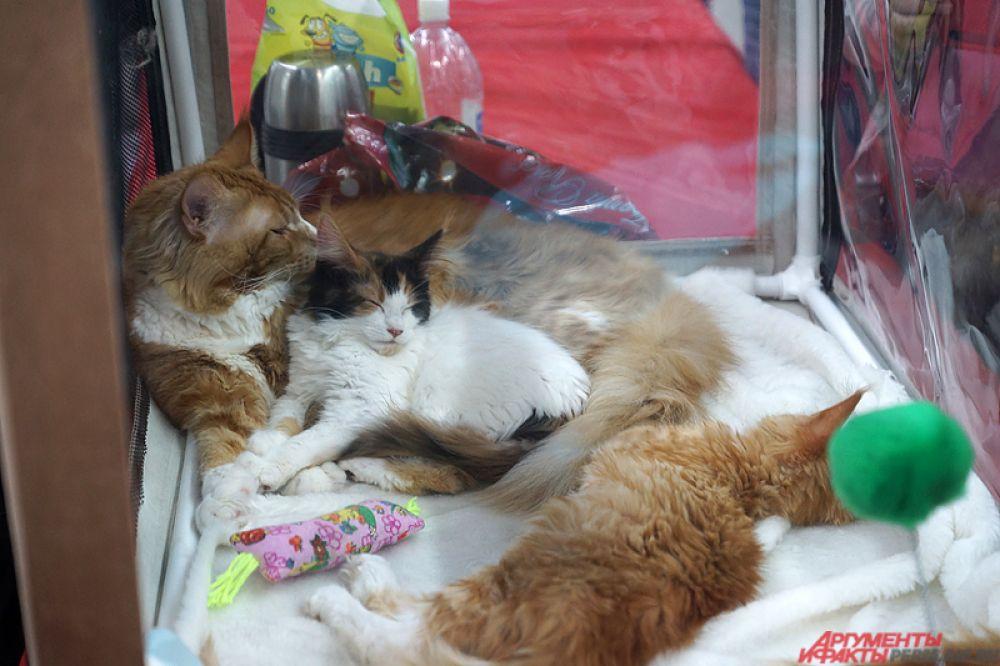 Многие кошки дремали в своих прозрачных коробках.