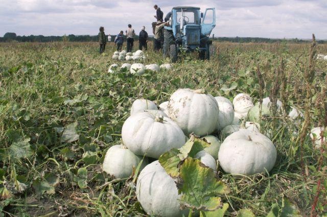 аграрии Викуловского района планируют засеять более 33 тыс. га зерновыми и кормовыми культурами