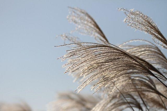 Сильный ветер может привести к обрыву проводов.