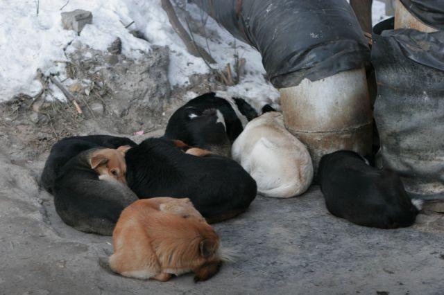 Жительницу Нижнего Новгорода всобственной квартире обглодали собаки