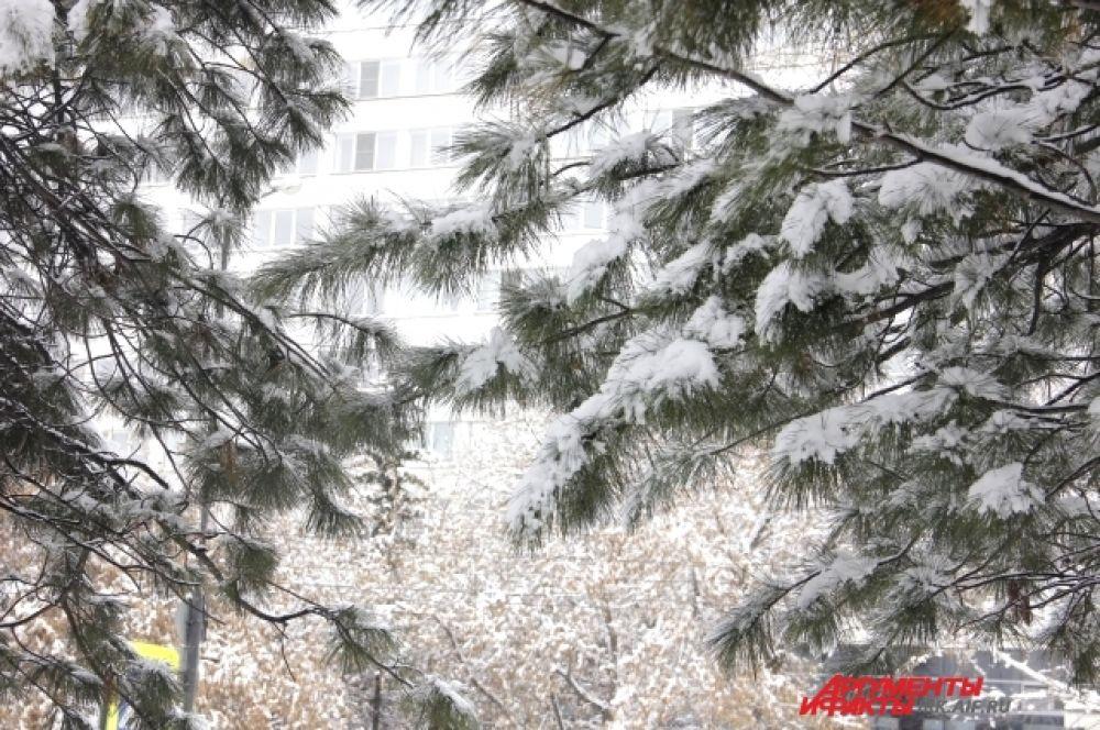 Снег фотографировать очень приятно!
