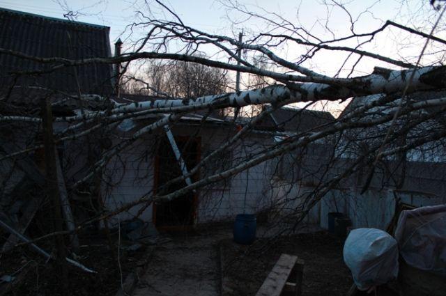 Под Воронежем погибла школьница, накоторую упало дерево
