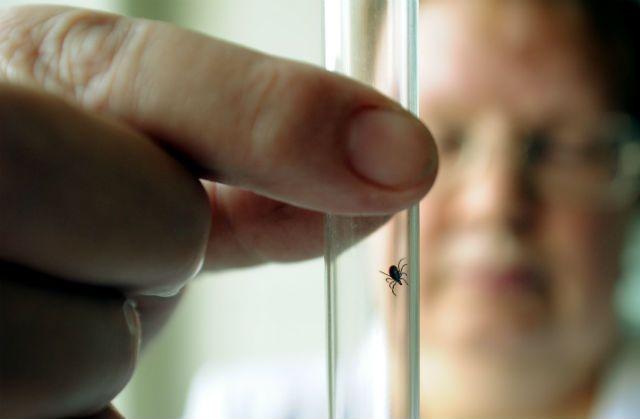 В Кемеровской области зафиксированы первые случаи укуса клещей.