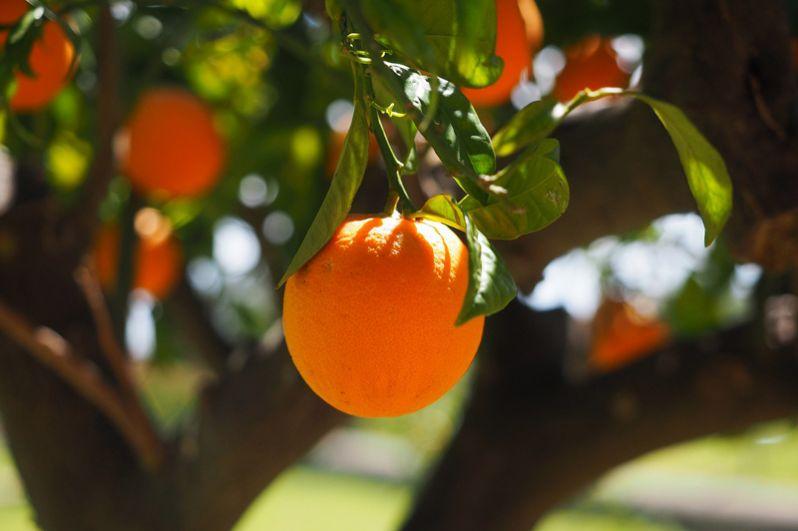 Апельсин (60 мг). Как ни странно, апельсин занимает далеко не первое место в списке продуктов, богатых витамином С. В лимоне, кстати, витамина еще меньше.