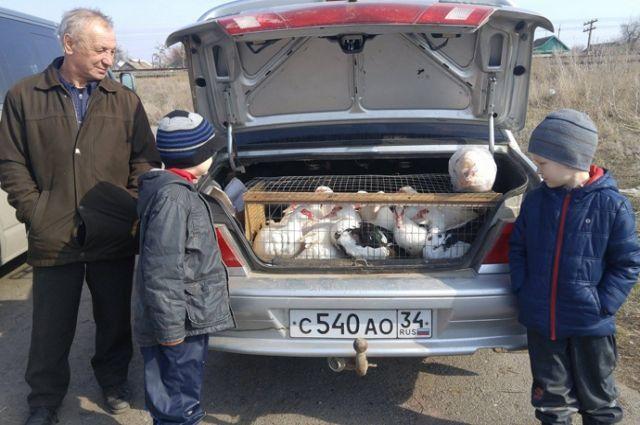 «Птичий рынок» без контроля ветслужб - «ворота» для завоза в регион АЧС и других опасных инфекций.