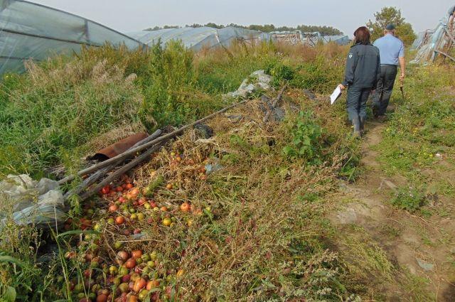 Были исследованы образцы почвы, на которой выращивались овощи.