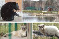 После зимы звери в Белгородском зоопарке чувствуют себя хорошо.