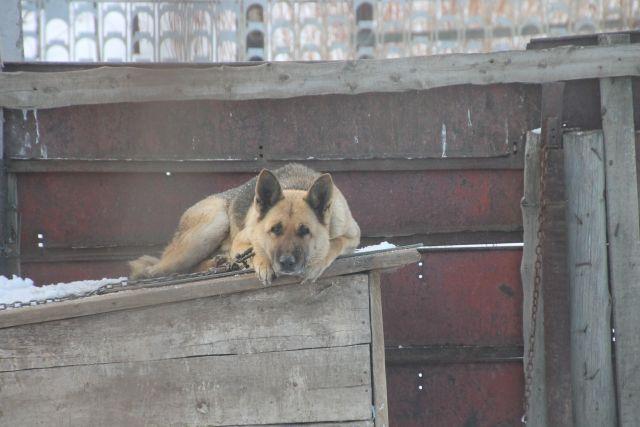 В Тобольске пьяный мужчина натравил на женщину-полицейского свою собаку