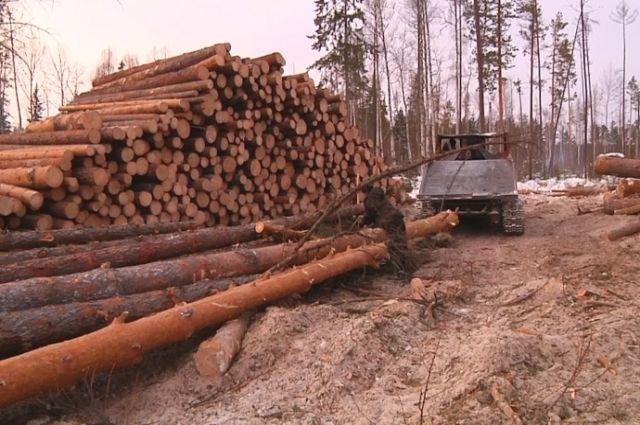 Сумма ущерба, который нанёс черный лесоруб в Ермаковском районе, составила около 200 тысяч рублей.