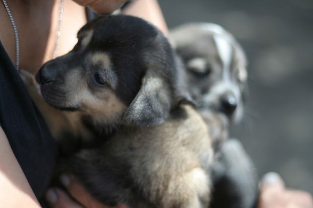 Зоозащитники планируют провести общегородской митинг против садизма по отношению к животным в муниципальном приюте.