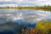 На Ямале для подростков пройдет экологический квест.