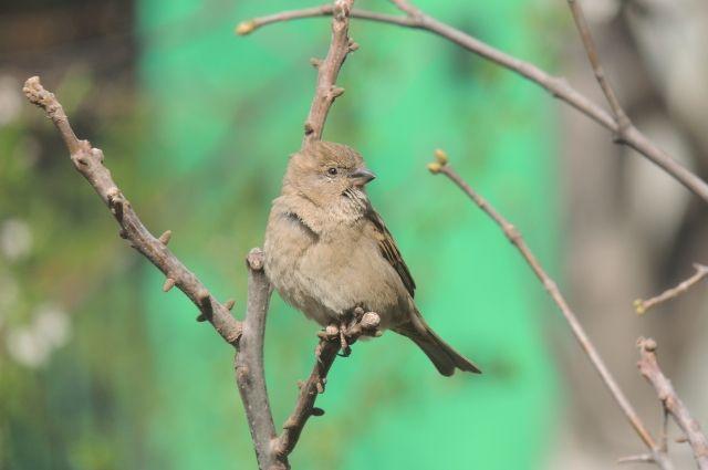 Перед Благовещением во многих регионах России отлавливают диких птиц, чтобы потом выпустить их, отдав дань традиции.