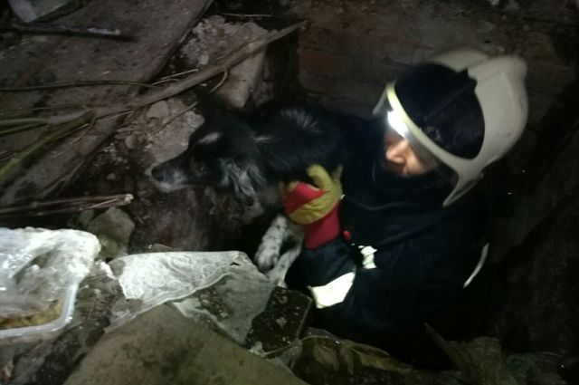 Сотрудники Кунгурской городской службы спасения помогли собаке выбраться из погреба.