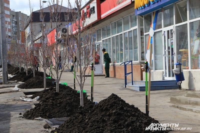 Через несколько минут клёны-красавцы посадят на проспекте Сельмаш.