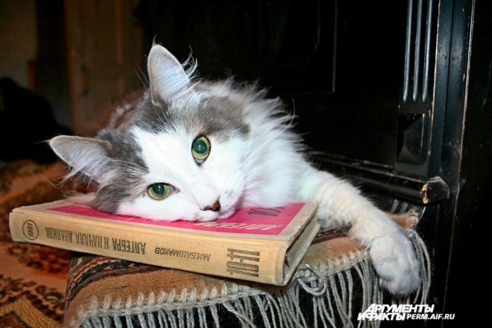 Участник №17. Хозяйка Елена: «Кот на наше «больное место» - математика приложился»
