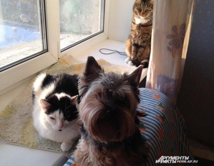 Участник № 2. Мафия бессмертна: Кексик, Муся и Кот