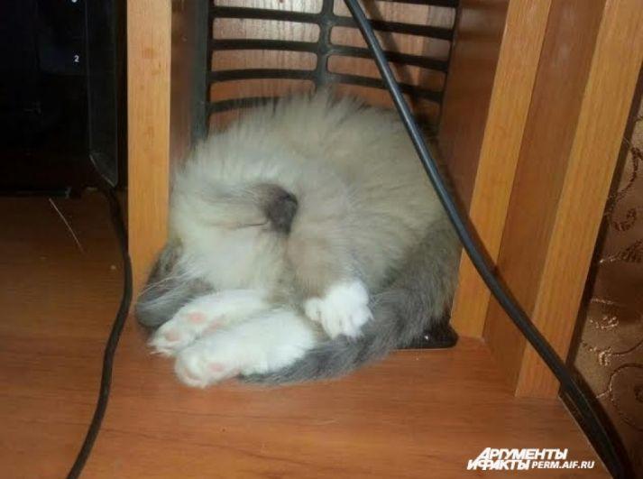 Участник №11. «Я так устала, не мешайте спать!»