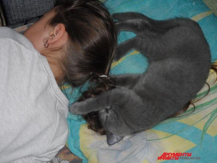 Участник №13. Кошка Белочка обожает спать и валяться на спинке