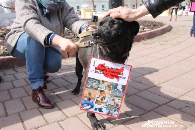 Оренбуржцы вышли на митинг, чтобы защитить жизни животных