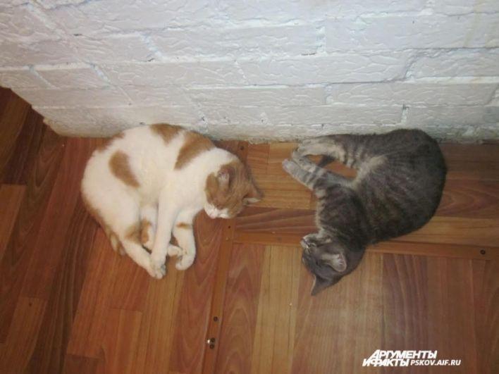 Участник № 6. Кот Пушок и кошка Муся
