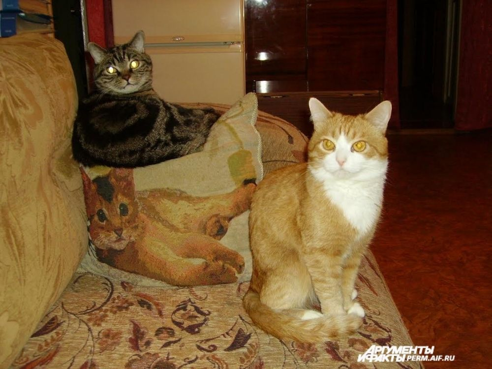 Участник № 8. Марсик и Рыжик на своём любимом диване