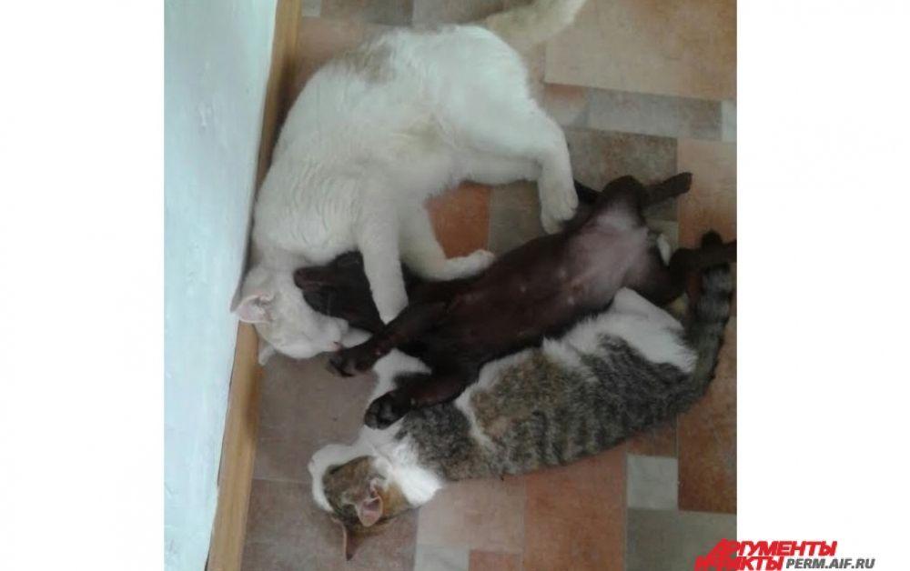 Участник № 15. «Кошки спят, они устали, Таська сильно измотала!»